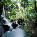 Koi pond in Shangri-La Hotel Singapore. Photo courtesy of Shangri-la Hotels and Resorts.